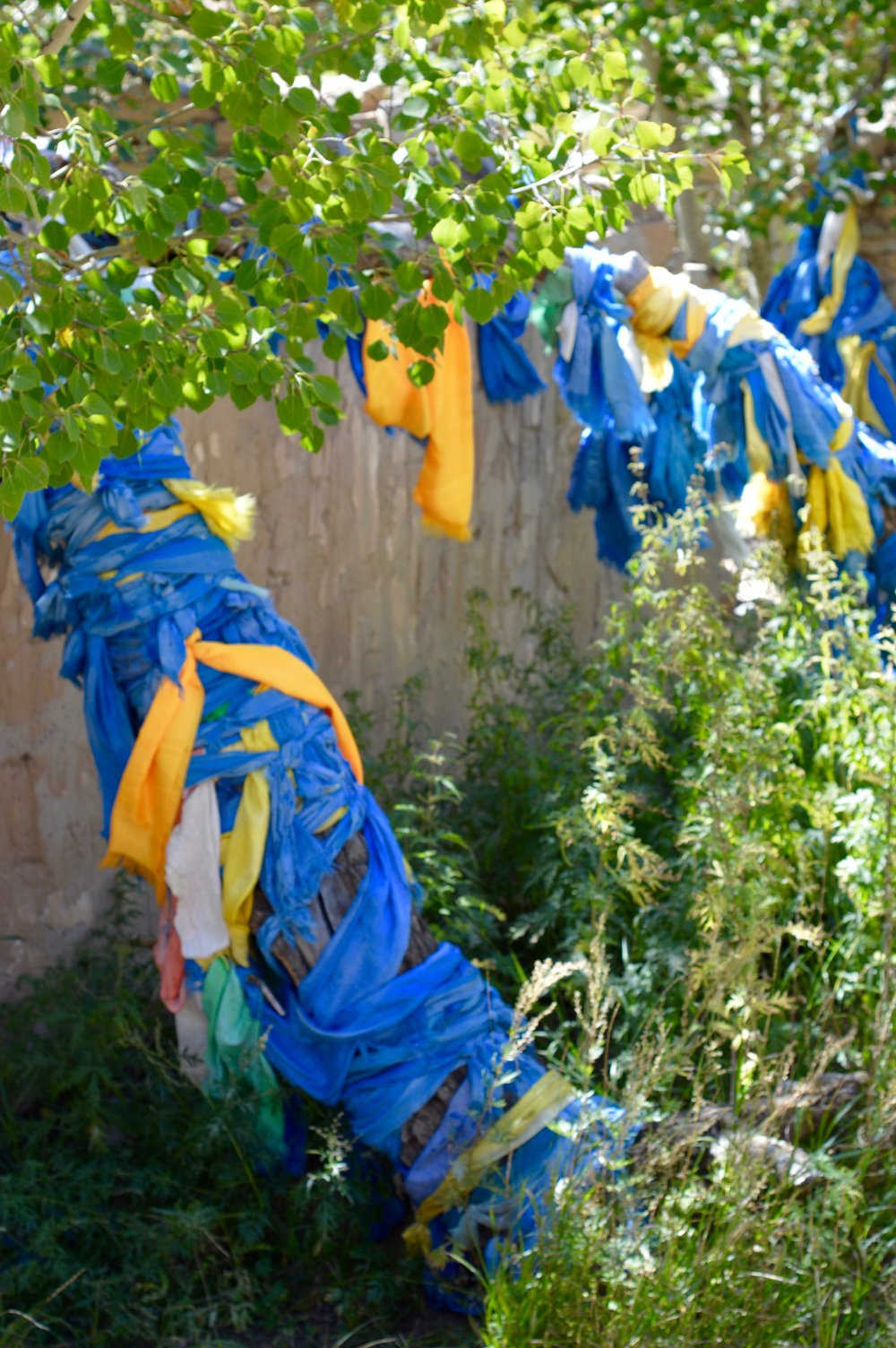 Prayer scarves tied around trees in the monastery