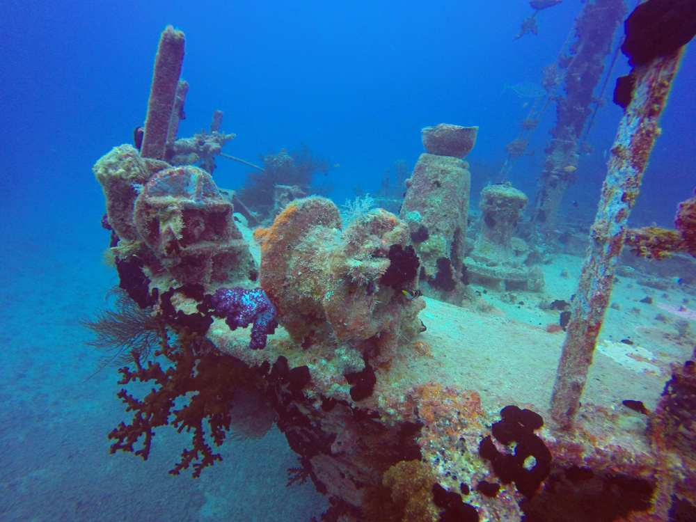 A wreck near the reef is covered with sea life.