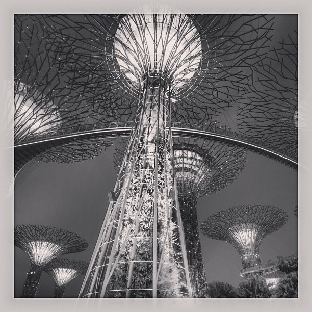 Gardens by the Bay, #singapore www.soperimages.com