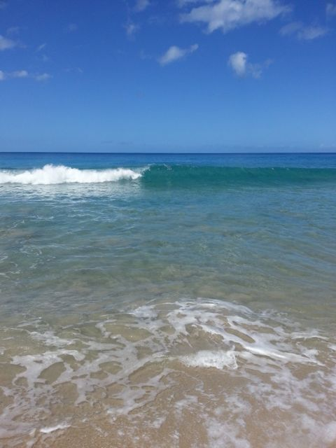 Box Jellyfish Hawaii Big Island
