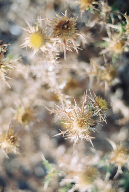 Fine art film photography Corsica