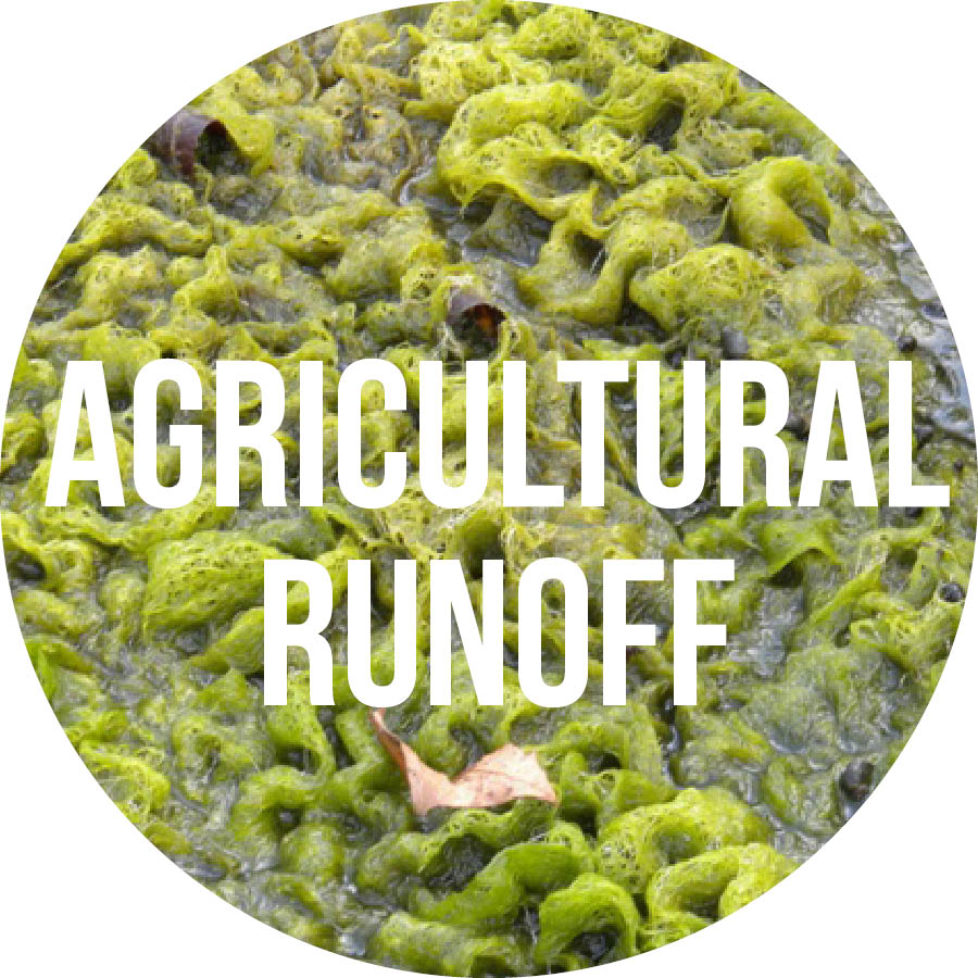 Agriculture Circle Button.jpg