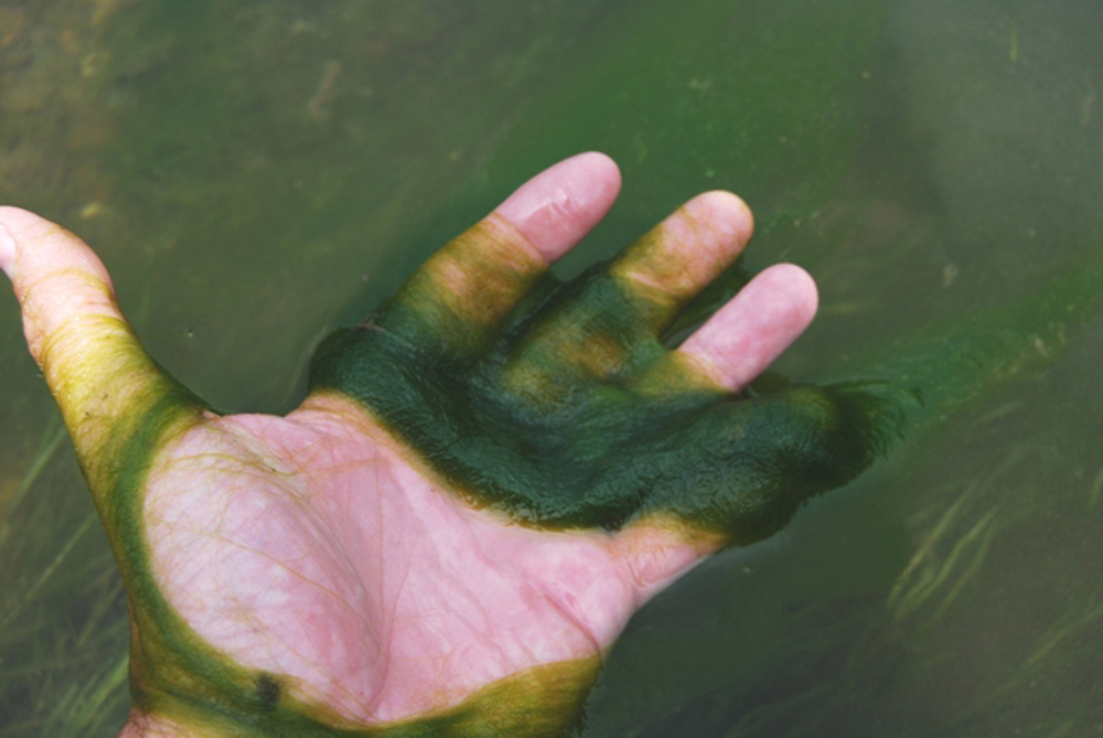 Snot algae.jpg