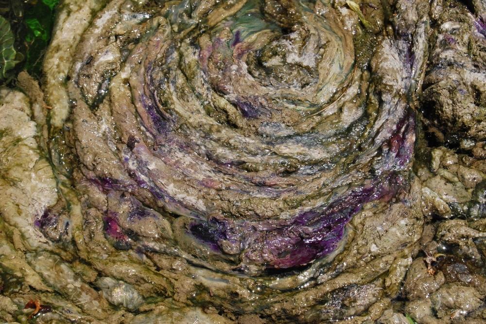 Algae Swirl.JPG