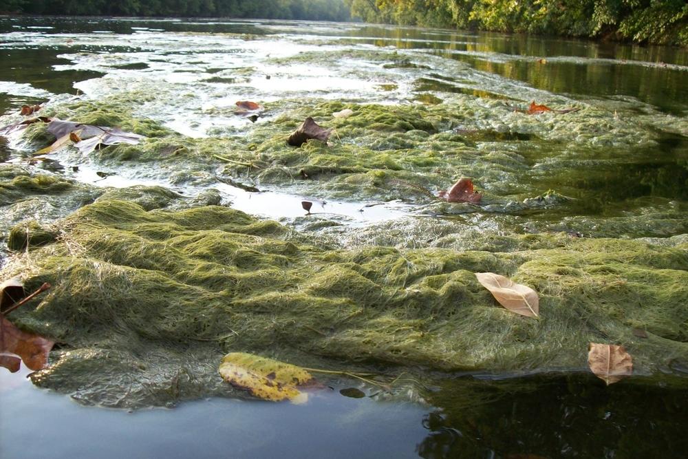 algae mat.JPG