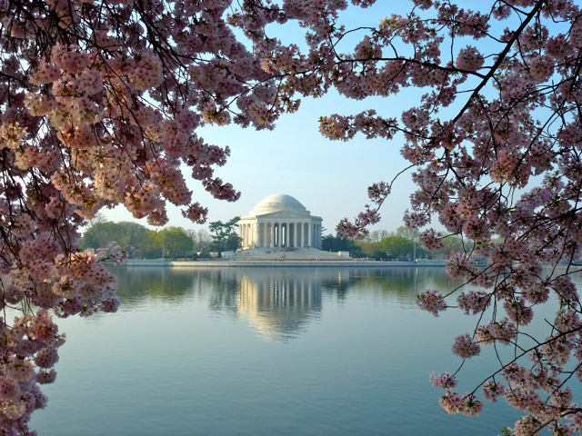 Jefferson+Memorial+and+cherry+blossoms.jpg