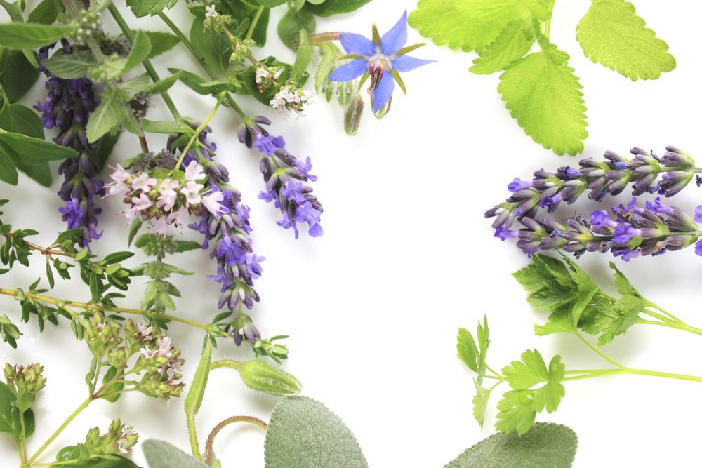 Herbal Theray-Body Wraps.jpg