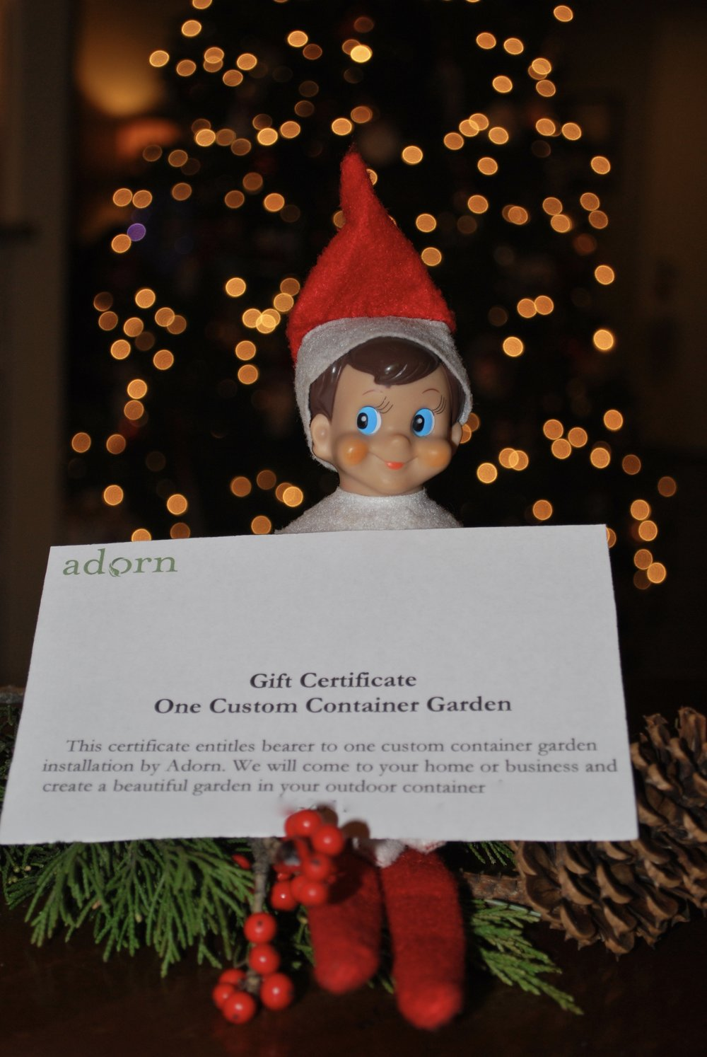 "Adorn Gift Certificates   ""Adorn"" your loved ones this holiday season! A gift certificate for custom container gardens is the perfect item for your friends and family. The certificates come in any denomination. Just give us a shout if we can help you cross some gifts off your list."