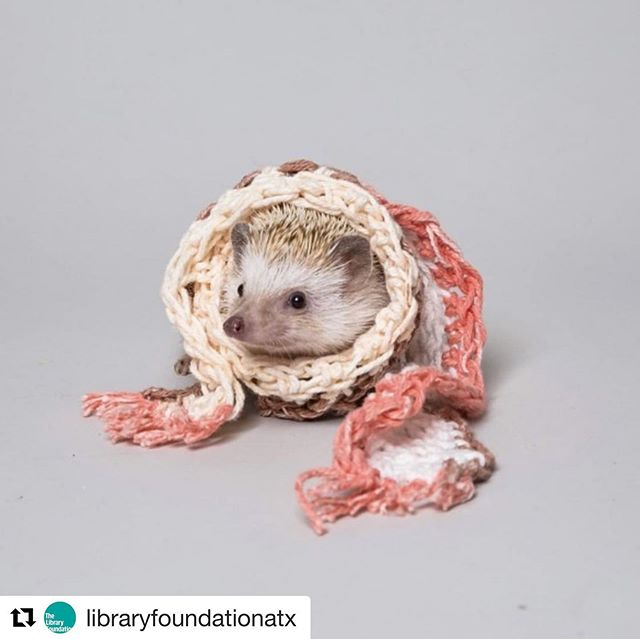 What kind of board member would I be if I didn't tell you about Cutefest?! #Repost @libraryfoundationatx with @get_repost ・・・ What's cuter than a hedgehog in a tiny scarf? APL After Dark: Cutefest! It's an adults-only, after-hours gathering at @austinpubliclibrary Central with a petting zoo by @tinytailstoyou, board games, drinks, dancing, DJ, crafts, storytelling & comedy! This Friday, March 29, from 7-9pm. Tickets are sold out, but we'll sell limited tickets at the door, as space allows. $7 each. . . . #austinpubliclibrary #apl #austinlibrary #library #libraries #libraryfoundation #austin #atx #aplafterdark #cutefest #cute #cuter #cutest #hedgehog #pettingzoo #tinytailstoyou #boardgames #storytelling #comedy #crafts #fun #adultsonly #afterhours