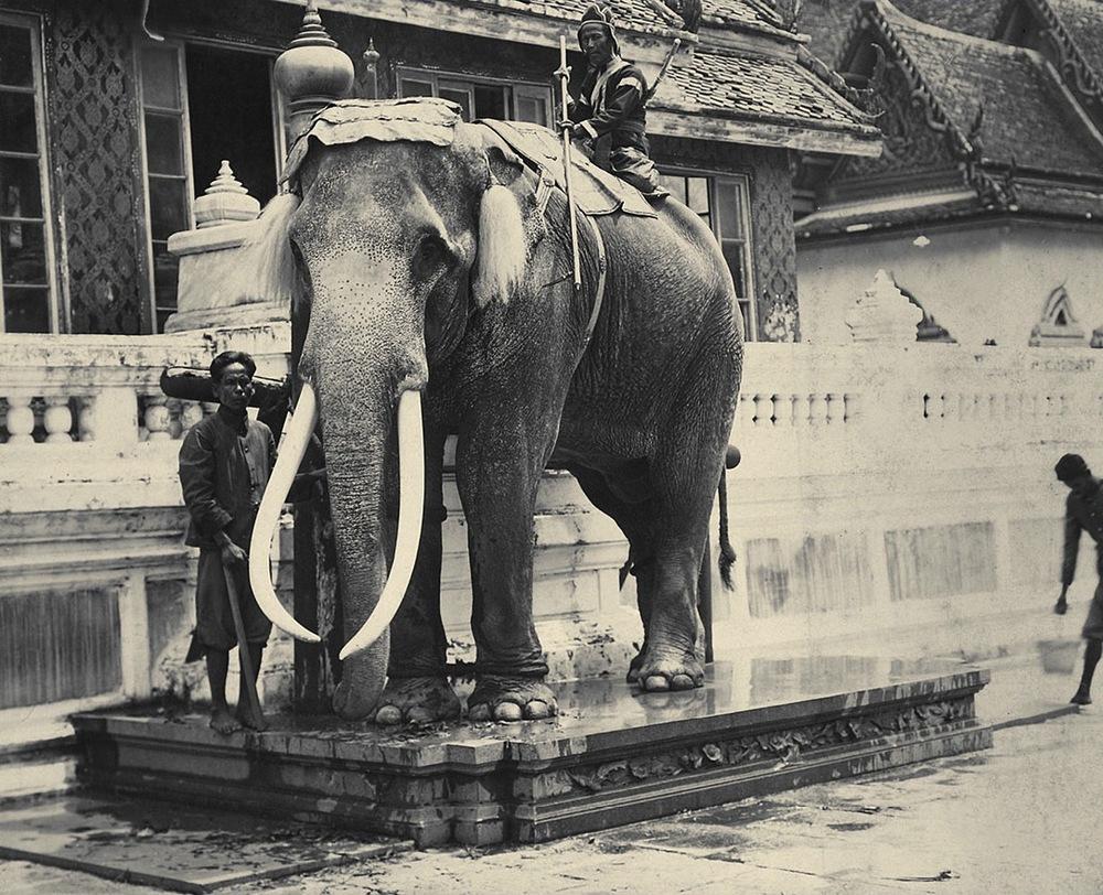 Royal_White_Elephant_at_the_Grand_Palace