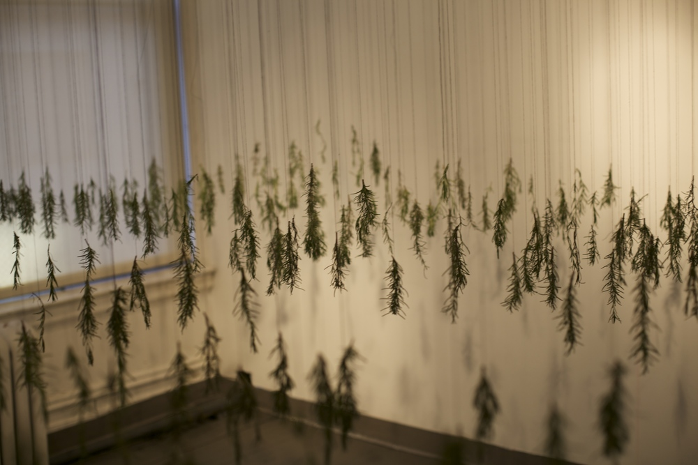 Thread, rosemary, felt, 2014