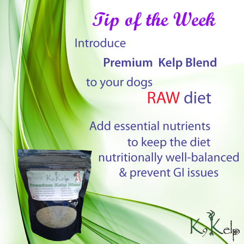 Tip of the Week - Raw Diet