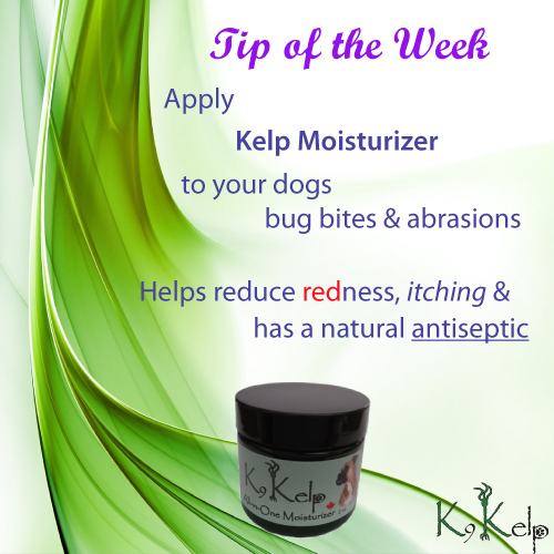 Tip of the Week - Antiseptic