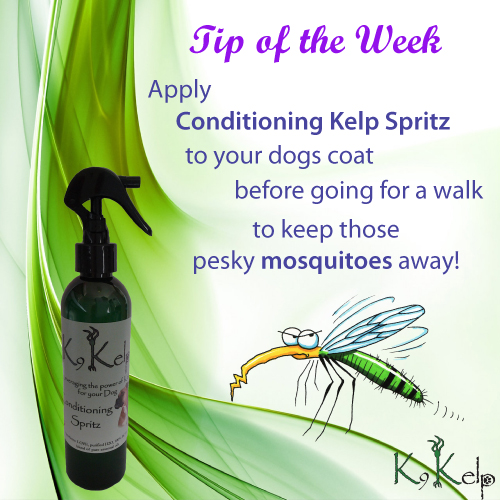 Tip of the Week - Insect Repellent