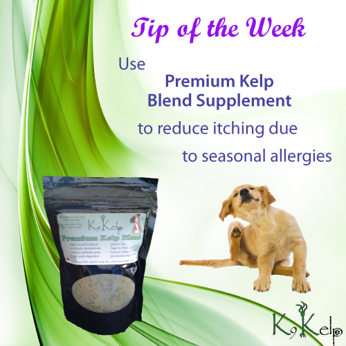 Tip of the Week - Dog Allergies