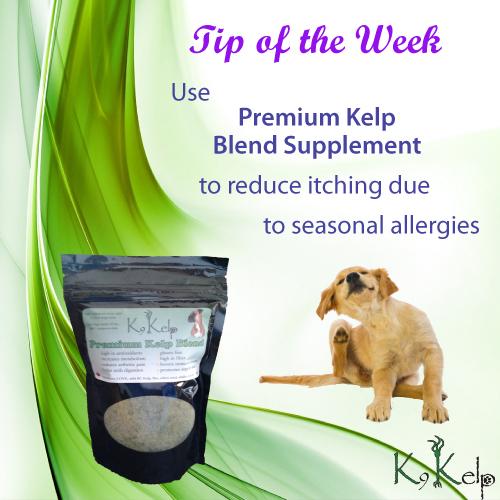 Tip of the Week - Dog Allergies