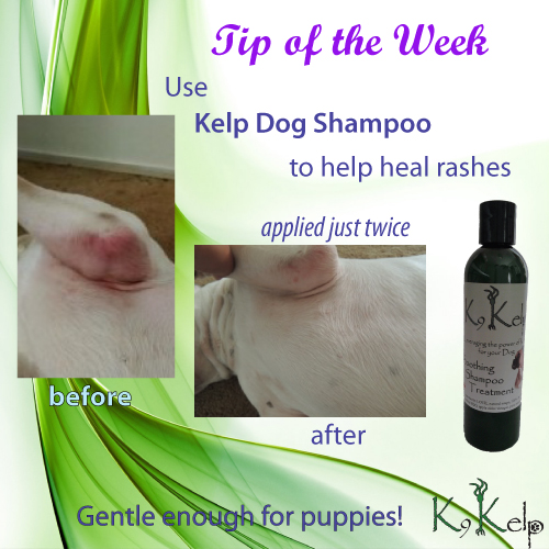 Tip of the Week - Dog Rash Relief