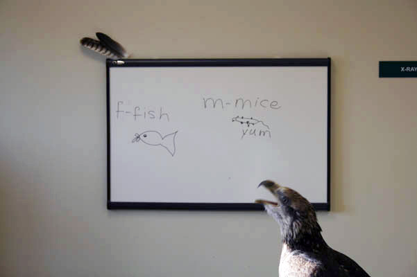 Fish and mice… yum!