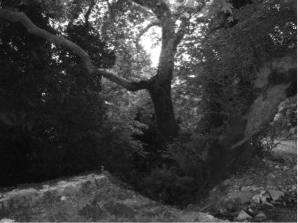 Hanging Tree in Lia, Epirus - Zander Abranowicz