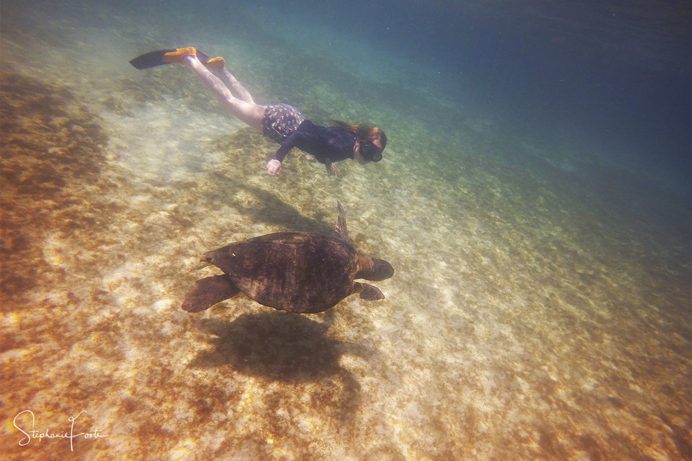 Snorkelling beside a graceful turtle in Penguin Bay was a magical moment, as someone who was once afraid to swim in the sea I can safely say Galapagos cured this!