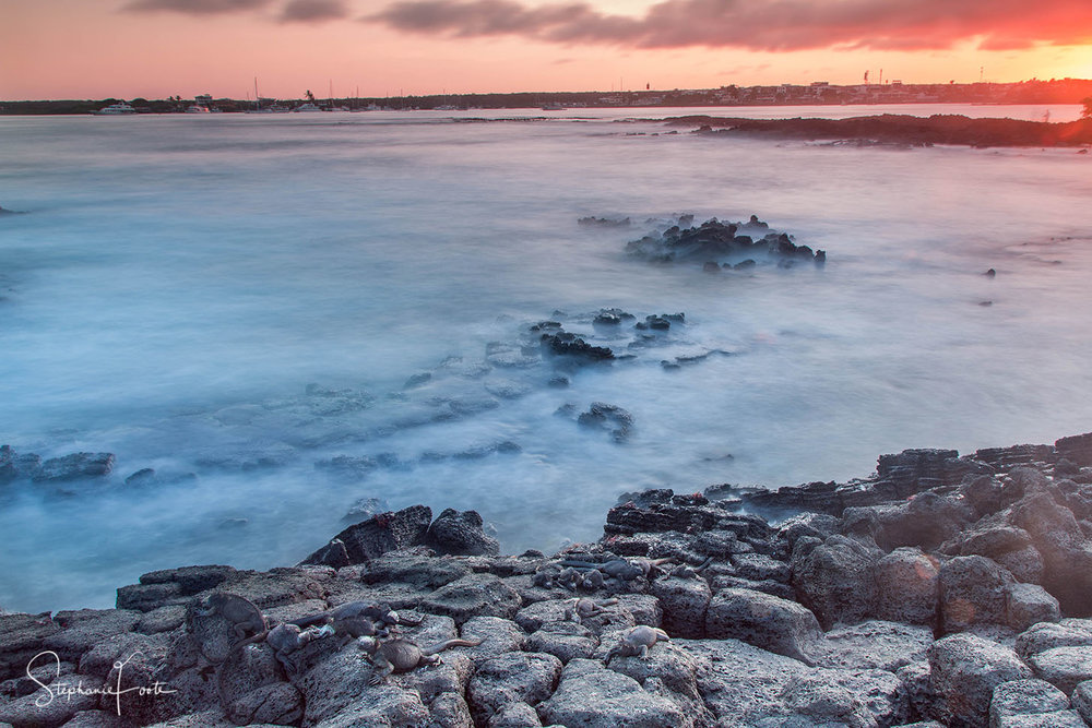 A stunning sunset on Santa Cruz, complete with marine iguanas.