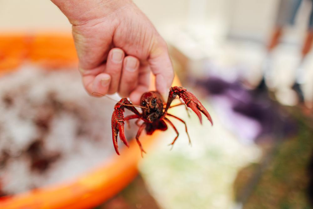 crawfish_boil-1.jpg