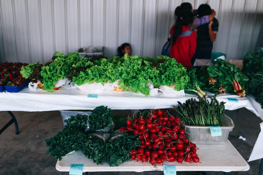 farmers_market-33.jpg