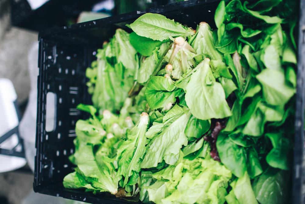 farmers_market-49.jpg