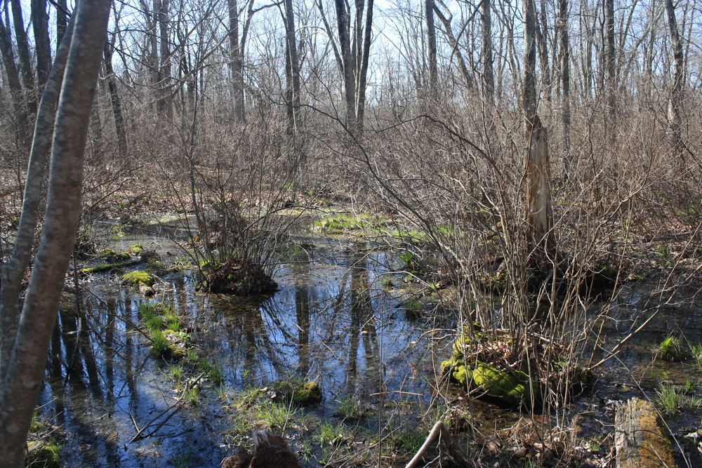 One of the vernal pools at Broadmeadow Brook Nature Preserve in Worcester, MA