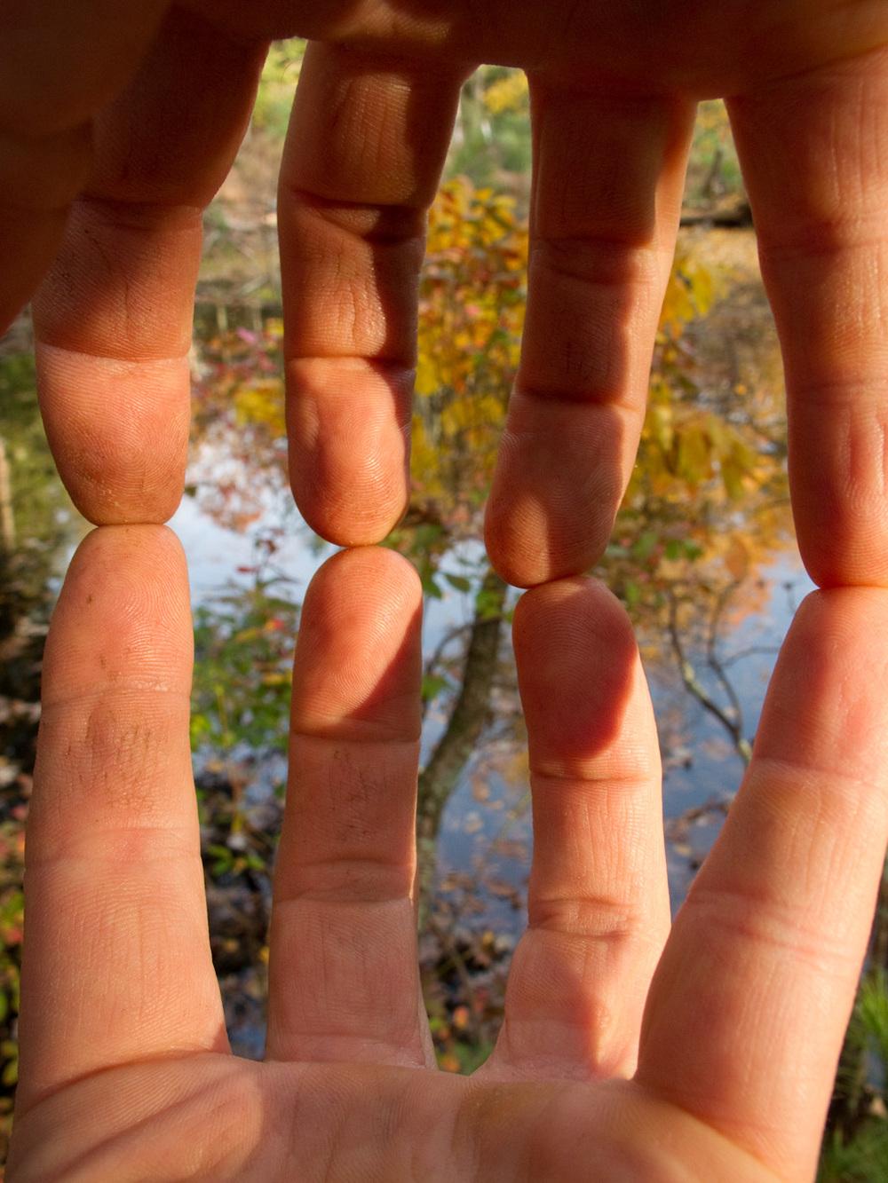 "Fingers, #68  ,  2010, 43"" x 34"", Pigment print"