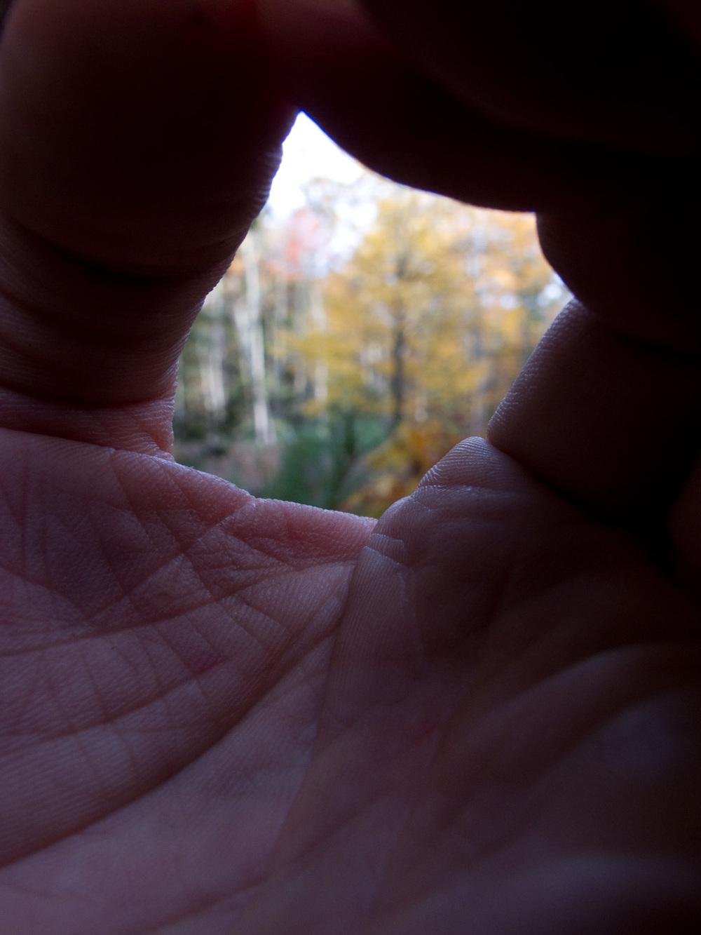 "Fingers, #3  ,  2010, 43"" x 34"", Pigment print"