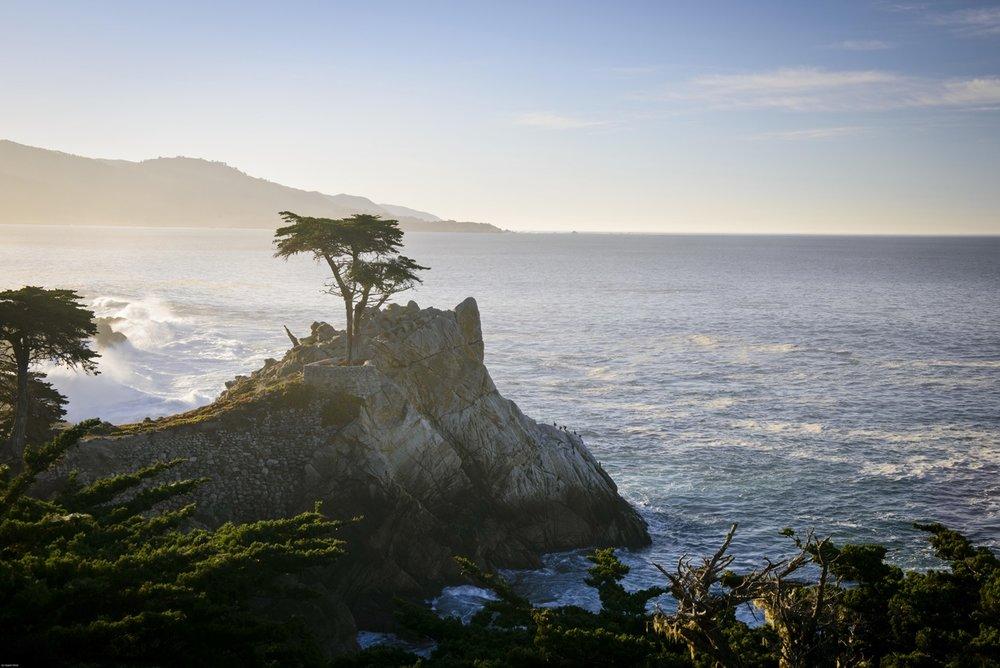 The-Lone-Cypress-21498x1000.jpg