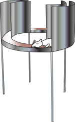 We assess anxiety-related behaviors using the elevated zero maze. There are open and closed areas of the zero. The open areas are anxiety-provoking for rodents. As such, more time in the open area = decreased anxiety.