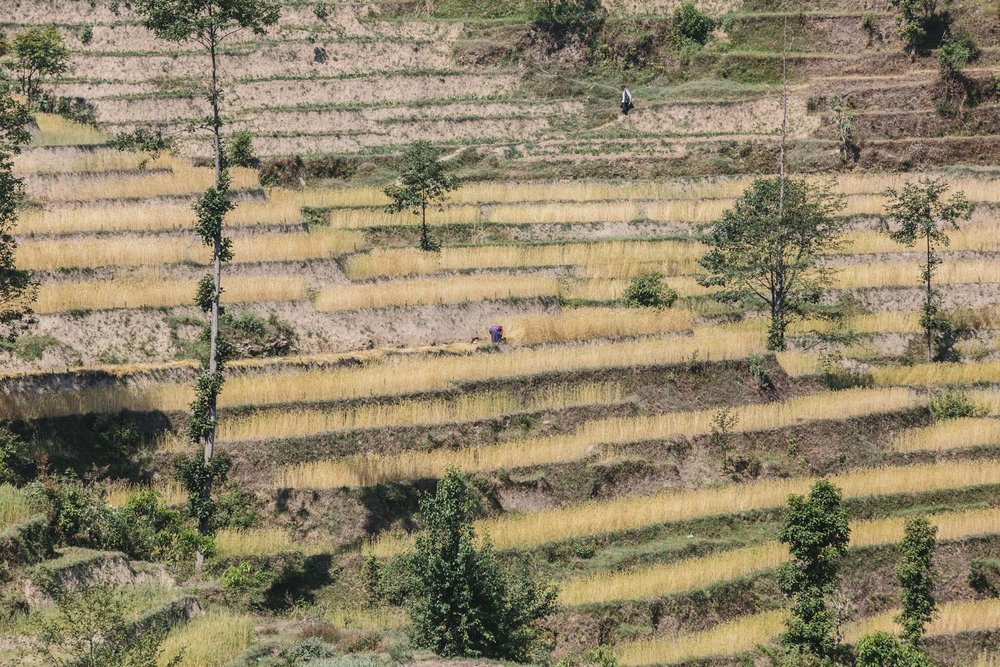 Mountain farming, Nepal.