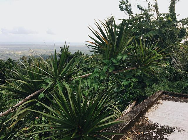 every step that you take think carefully what you do no matter what even the ones you love will hold it over you  no wrong is forgotten easily  #puertorico #beKOI #elyunquerainforest #travel #rooftop #veiws