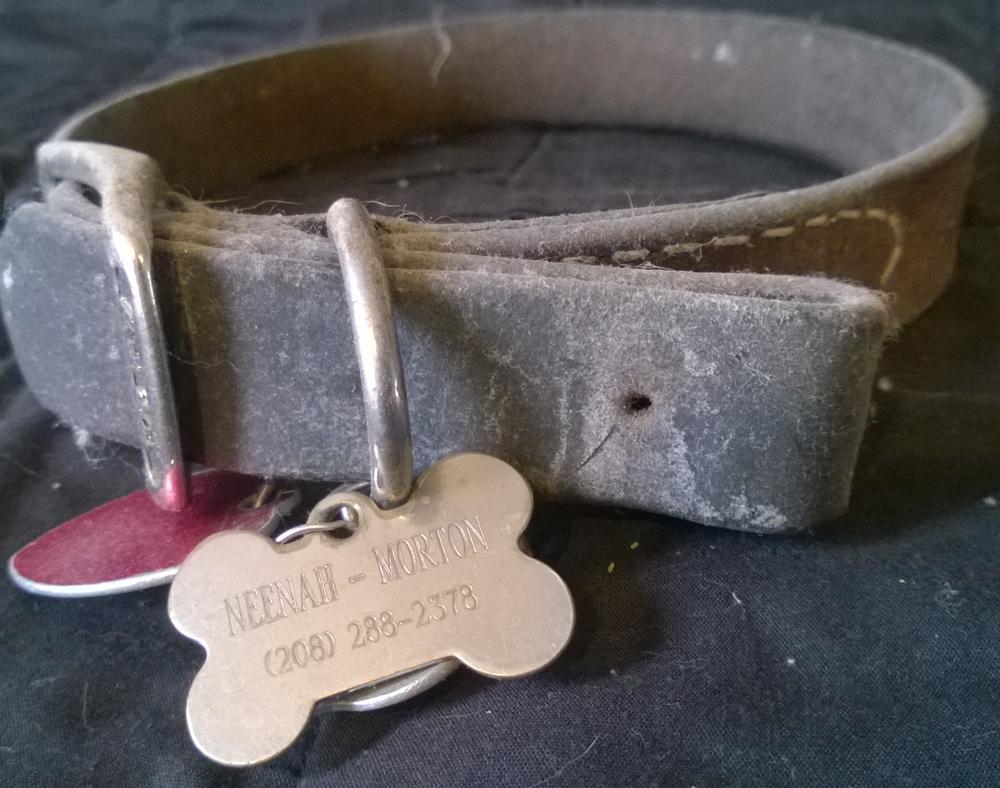 Clerical collar of Spiritual Director Neenah