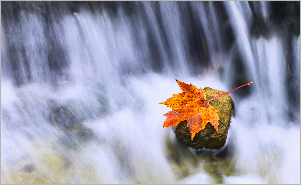 Leaf on rock at AuTrain Falls in Michigan's Upper Peninsula