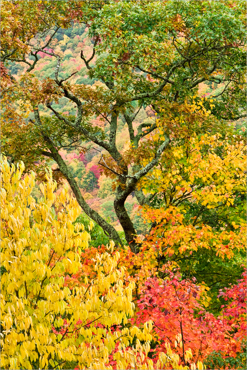 Fall foliage on display in the Great Smoky Mountains National Park.
