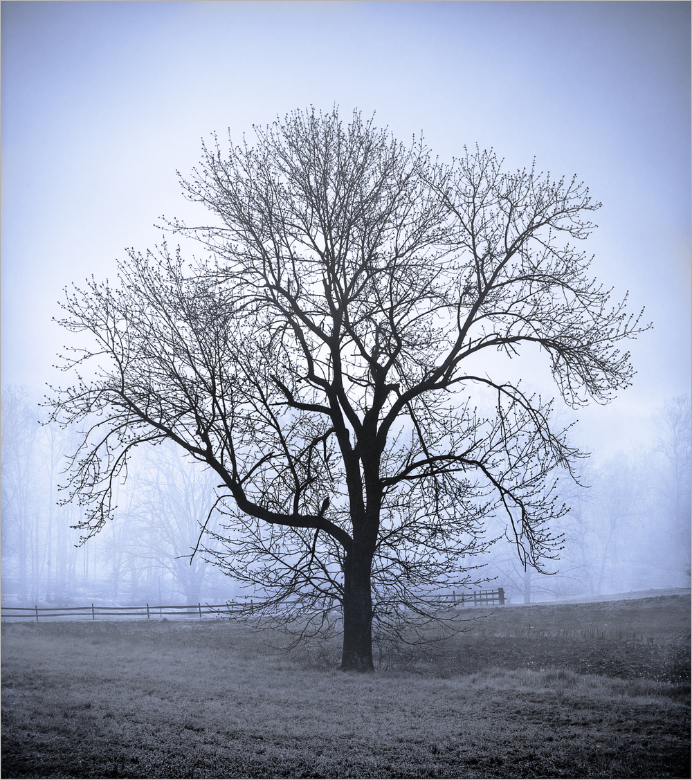 A bare tree reaches out with its branches on a foggy morning in Harrisburg, Pennsylvania