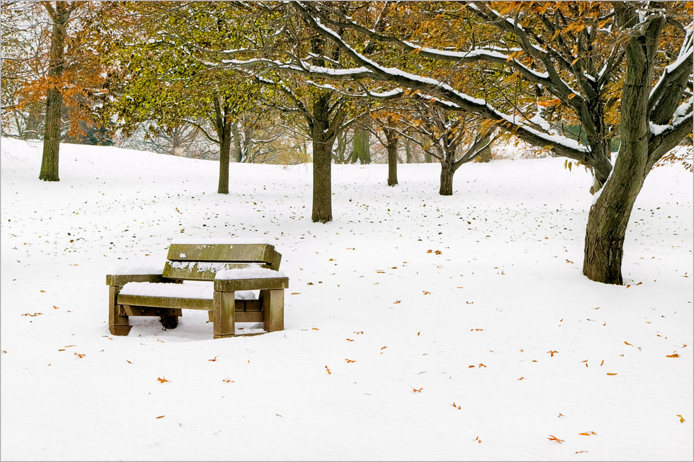 An empty bench in a snowy park conveys the loneliness of winter
