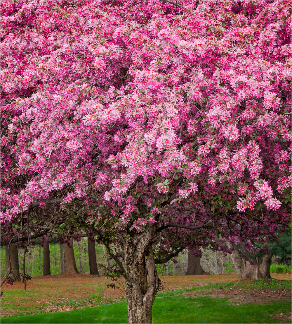 Pink Fantasy  © Howard Grill