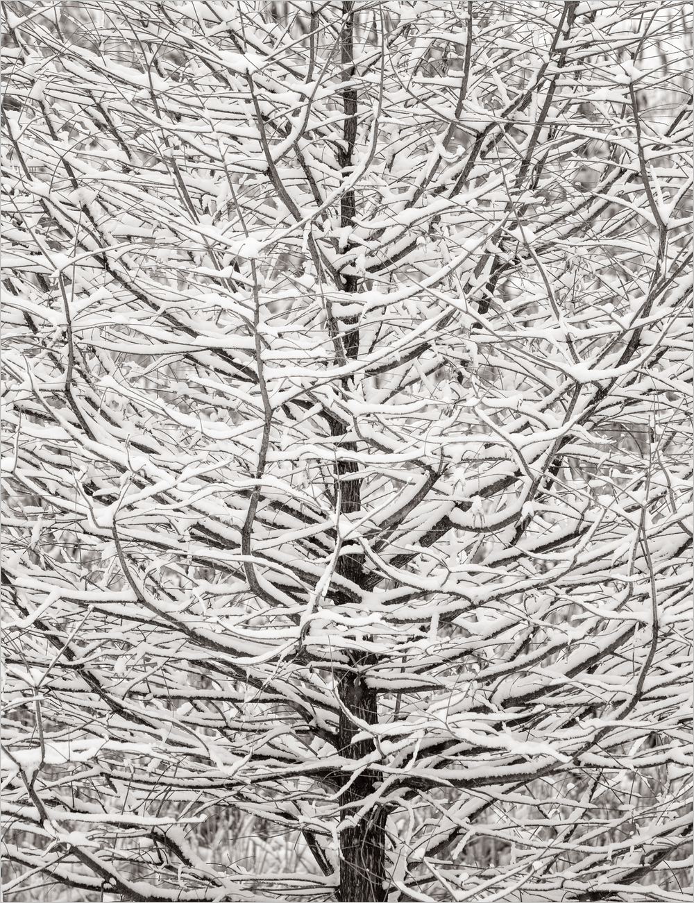 branches-in-snow.jpg