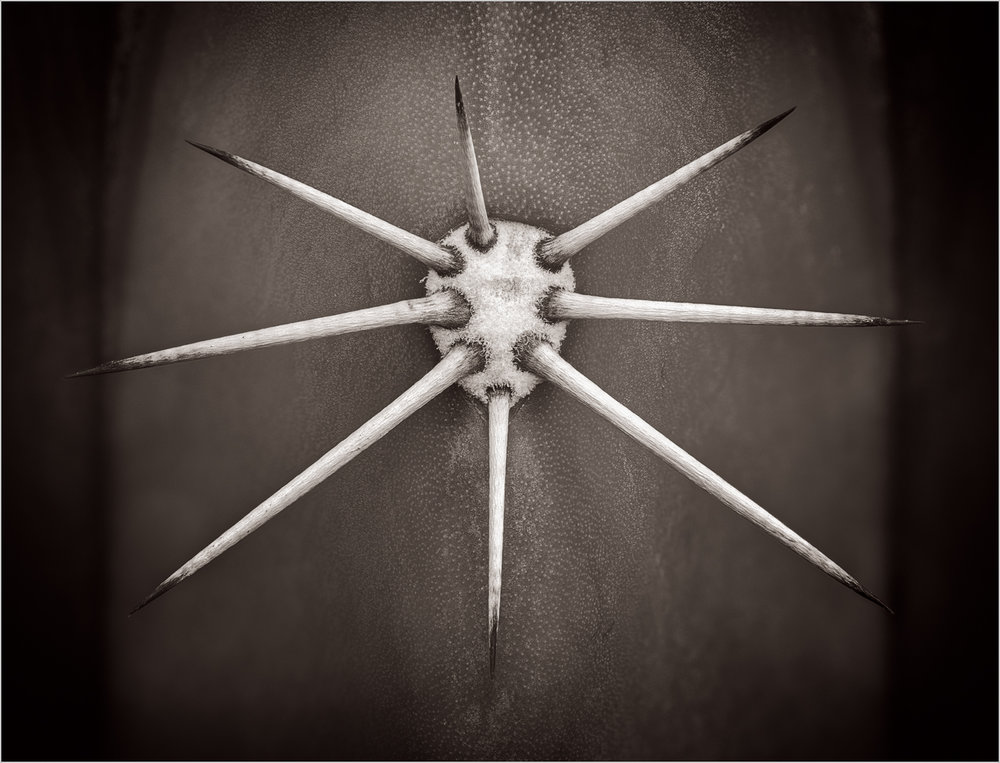 Cactus Spines    © Howard Grill