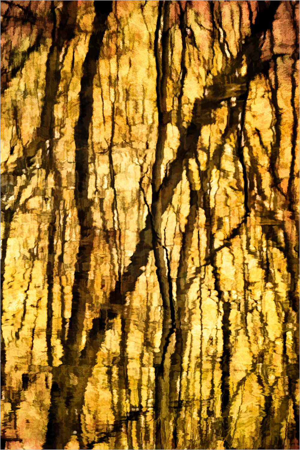 Tree Reflections    © Howard Grill