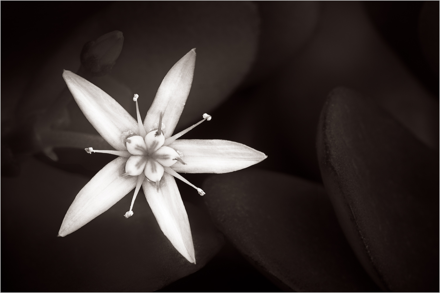 Botanicals In Black And White Howard Grill Photography