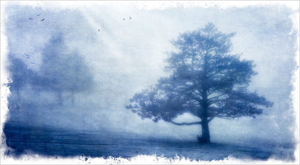 Fog And Trees    © Howard Grill