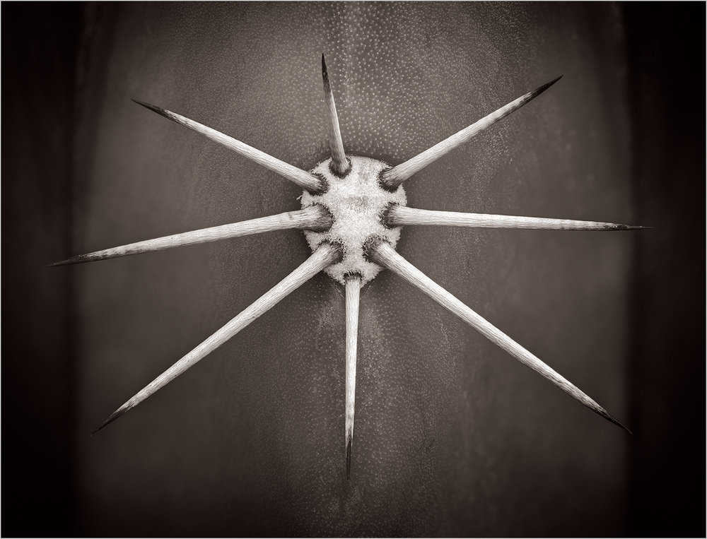 """Cactus Spines""    © Howard Grill"