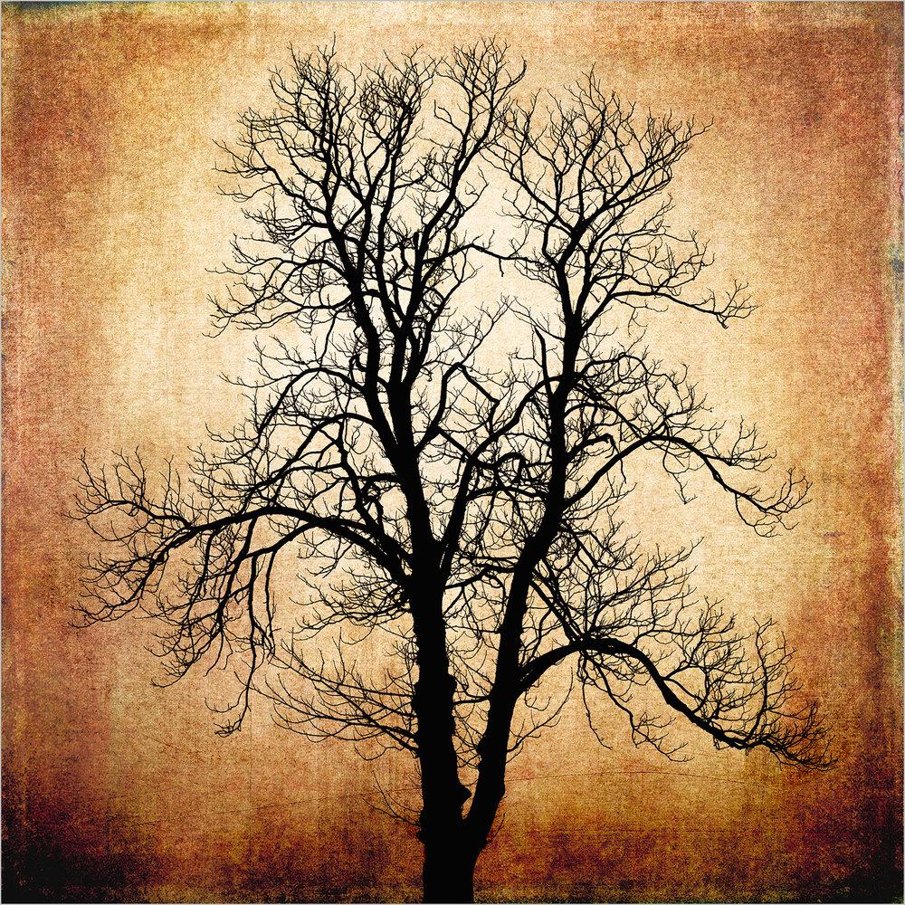 Tree #2 © Howard Grill