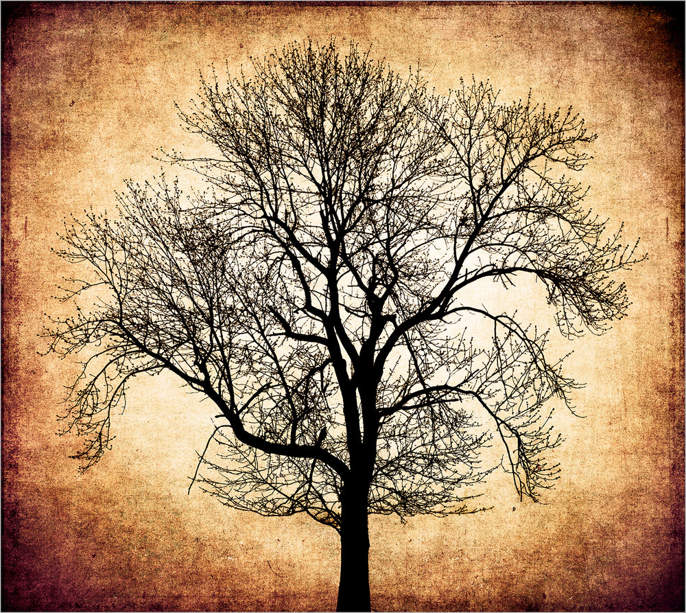 Tree #3 © Howard Grill