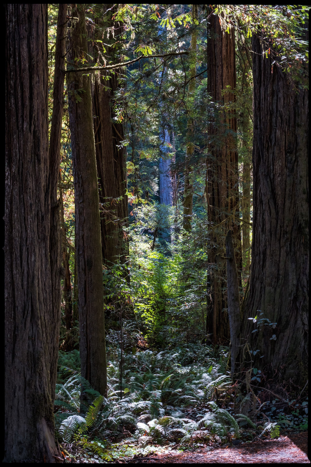 "This composition utilizes trees on opposite sides of the image to frame the ""tree of interest"" in the center of the photograph."